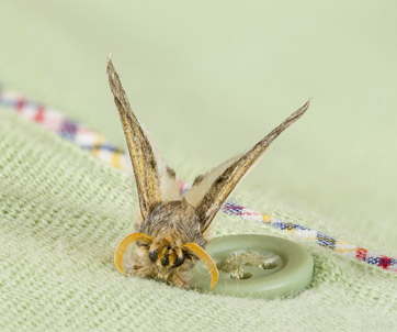 Fabric Pests